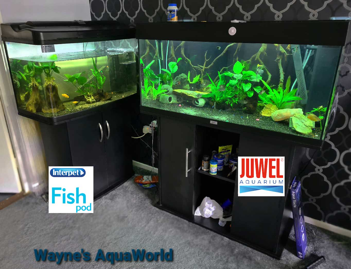I've upgraded my Fish Tank Aquarium AGAIN!! If you're looking for a great aquarium, here's a simple guide by Wayne's Aqua World. setup